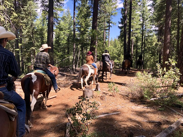 horseback riding with cowboys through Plumas National Forest at Greenhorn Ranch, Quincy, California