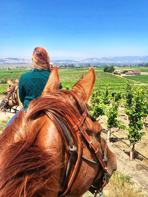 Looking out to Alta Visa Vineyards in Sonoma, California from the back of a Quarter Horse. Enjoying trail rides in Sonoma Wine Country.