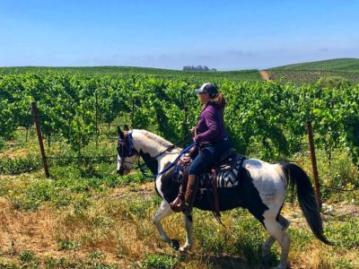 Cowgirl Chriss Fife horseback riding in Alta Vista Vineyards in Sonoma, California with blue sky above.