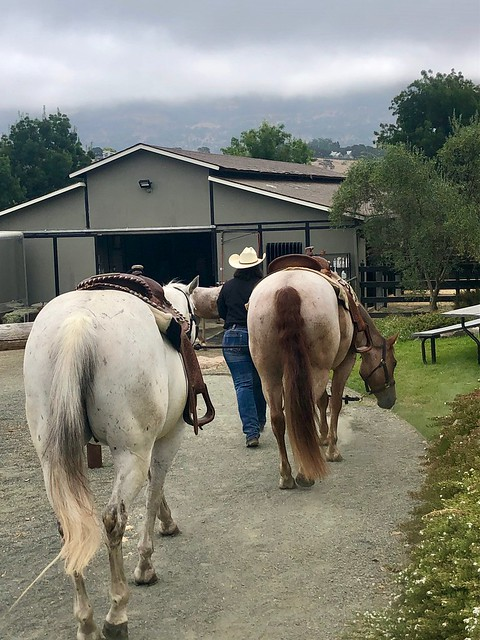 Cowgirl Kay Bakker leads two horses back to the barn after a Napa Valley trail ride.