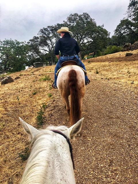 Cowgirl Katy Bakker on her horse, rides through the oak trees surrounding Shadybrook Estate Winery in Napa, California.
