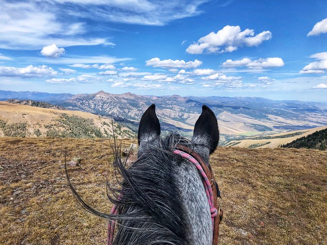 Looking out to Big Sky, Montana from Big Horn Peak near the northwest corner of Yellowstone National Park from between my horse, Essie's ears.