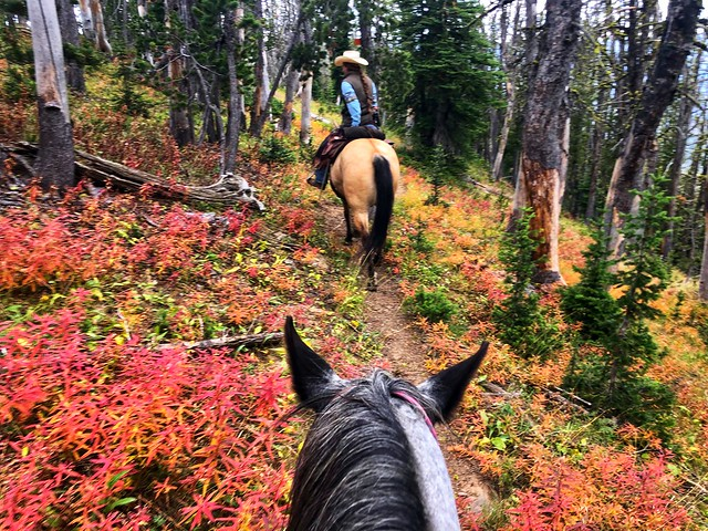 Wrangler Sarah Corning leads us on horseback through fall foliage at Yellowstone National Park Black Butte trail, Montana.