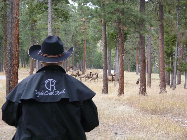 A lone cowgirl approaches elk herd in Bitterroot forest during a trail ride with Triple Creek Ranch in Darby, Montana.