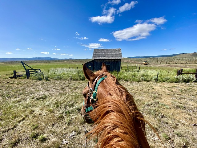 Chestnut Quarter Horse looks out to Charlie Owens homestead. Original wood cabin still stands at Silvies Valley Ranch in Seneca, Oregon.