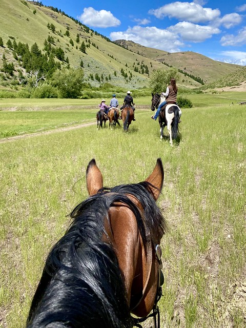 Five riders on horseback head to the meadow in Wolf Creek, Montana on horse riding vacations.