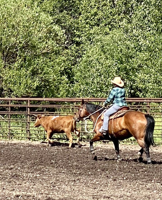 The author, Nancy D. Brown, riding horseback behind a lone cow in the arena at Rocking Z Ranch near Helena, MT.