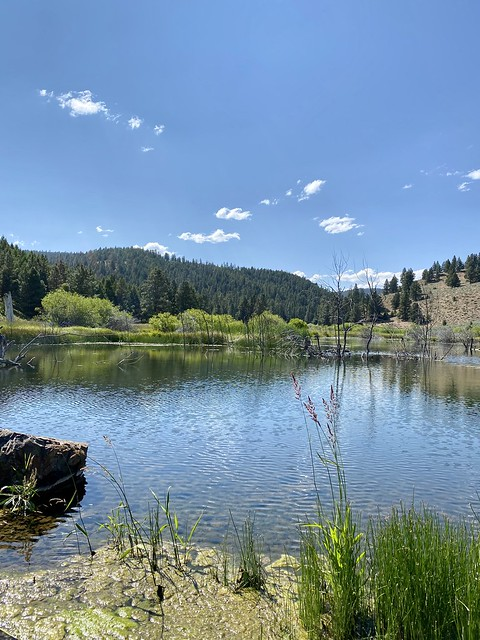 Looking out to the artificial beaver pond created on Silvies Valley Ranch in Seneca, Oregon.