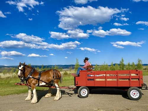 Team of Clydesdale horses hitched to a red wagon, driven by two cowboys from Silvies Valley Ranch in Seneca, Oregon
